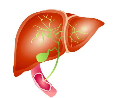 The Presentation of Infectious Hepatitis